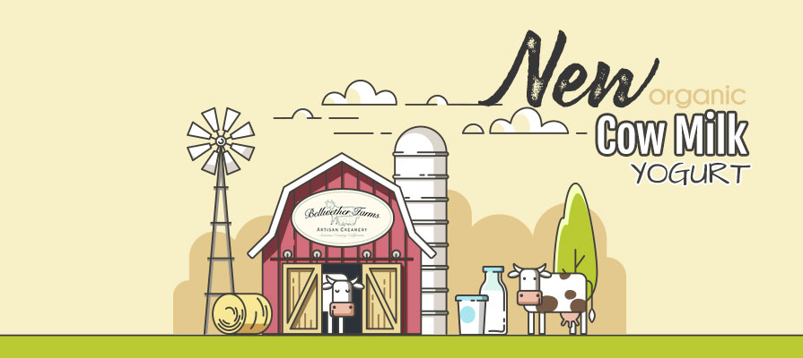 Bellwether Farms Introduces Organic Whole Milk Cow Yogurt