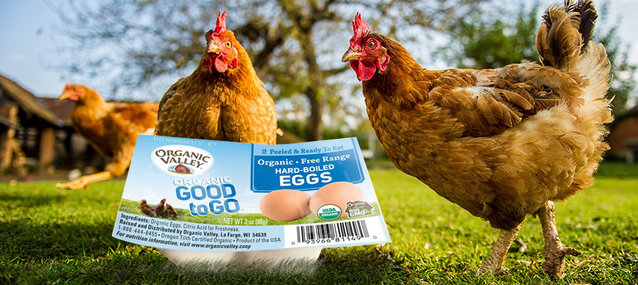 Organic Valley Launches Good to Go Hard-Boiled Eggs
