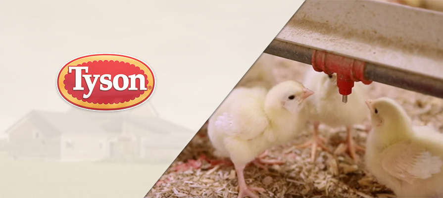 Tyson Cuts Ties With Inhumane Poultry Farm