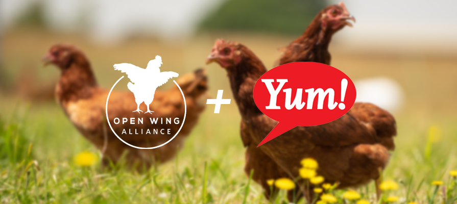 Yum! Brands Banners Enact New Cage-Free Egg Policy; Aaron Ross Shares