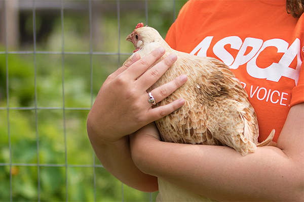 Many food companies across our industry's leading sectors have partnered with the ASPCA to add animal welfare to their missions and corporate social responsibility goals