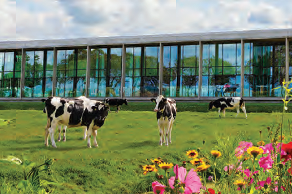 Beemster Cheese has put many initiatives into place to lighten its environmental footprint, including its free-grazing, grass-fed dairy farming that has a lower impact on the environment