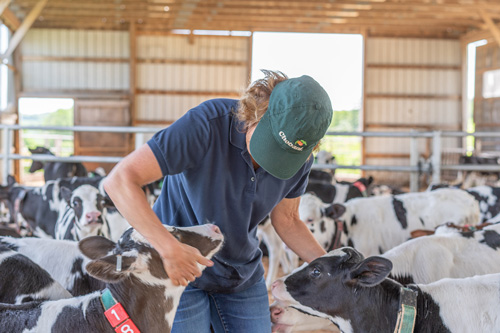 Chobani instilled six critical pillars into the Milk Matters program, including worker well-being, environmental stewardship, animal care, local sourcing, investment in dairy communities, and freedom and flexibility for dairy farms
