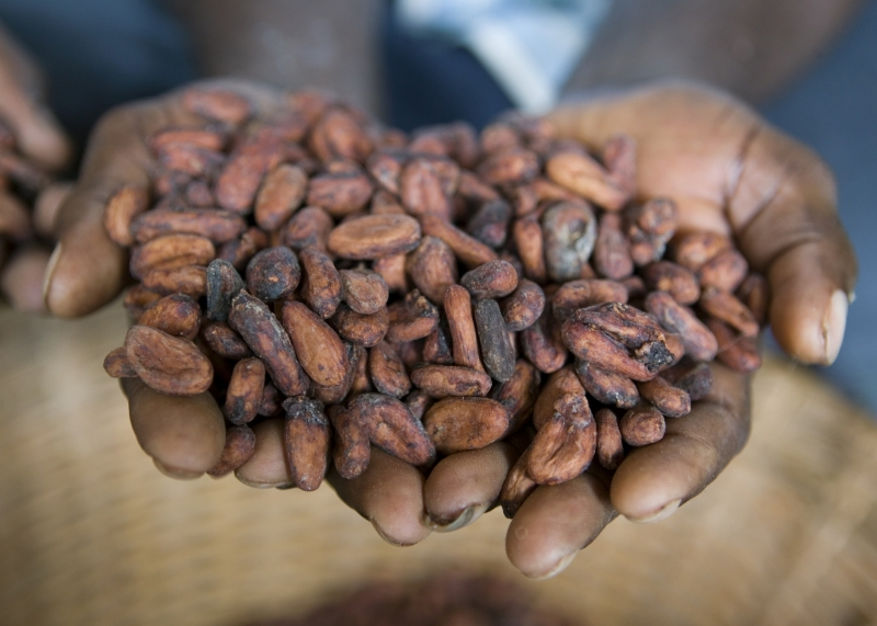 Cocoa Beans from Cargill Cocoa and Chocolate North America
