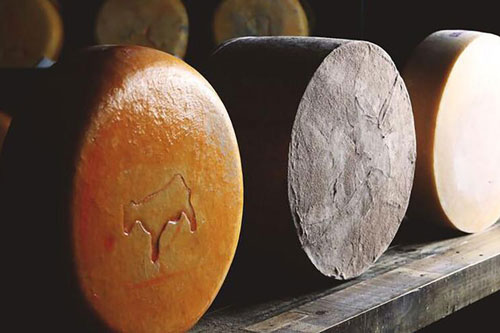 Fiscalini Cheese welcomed Alex Borgo as its new Head Cheesemaker