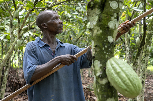 Together, GODIVA and the Earthworm Foundation will work to protect forests and the lives of people who grow and harvest cocoa