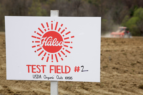Hälsa recently planted Scandinavian-style organic oat seeds at the pilot farm for its dairy-to-oat conversion program in upstate New York