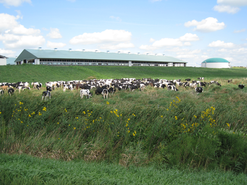 George Crave and his brother Charlie started their dairy farm in 1978, ensuring that Crave Brothers Farmstead Cheese is a family business through and through