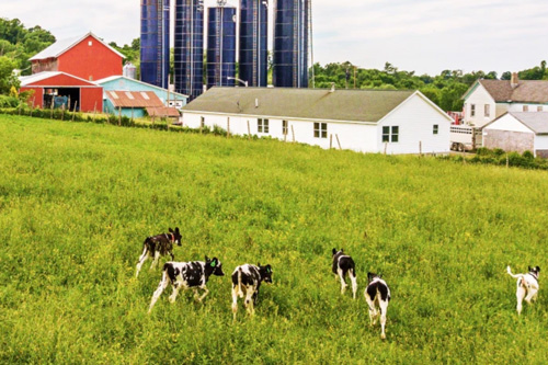 The Milk Matters™ program was designed to address many of the dairy industry's biggest challenges and establish transparency between dairy farmers and consumers