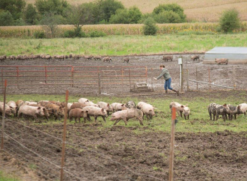 Niman Ranch is third-party-certified under the Certified Humane program and its meat is raised by a community of more than 720 independent U.S. family farmers