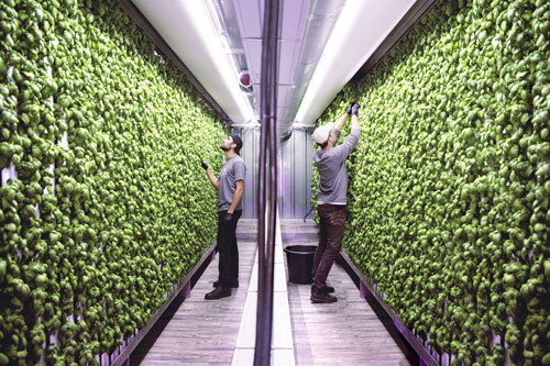 Gordon Food Service has linked up with Square Roots, a leader in urban indoor farming, to provide customers across North America with locally-grown food